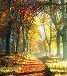 تابلو منظره پاییز